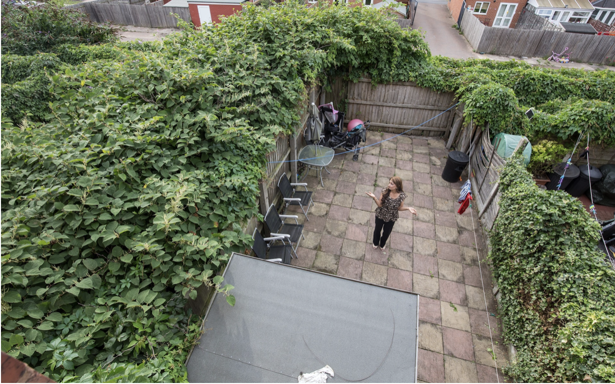 The Perils of Selling a Home with Japanese Knotweed